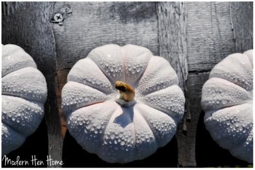 White Pumpkin 5