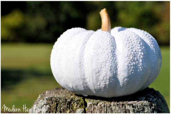 White Pumpkins 7